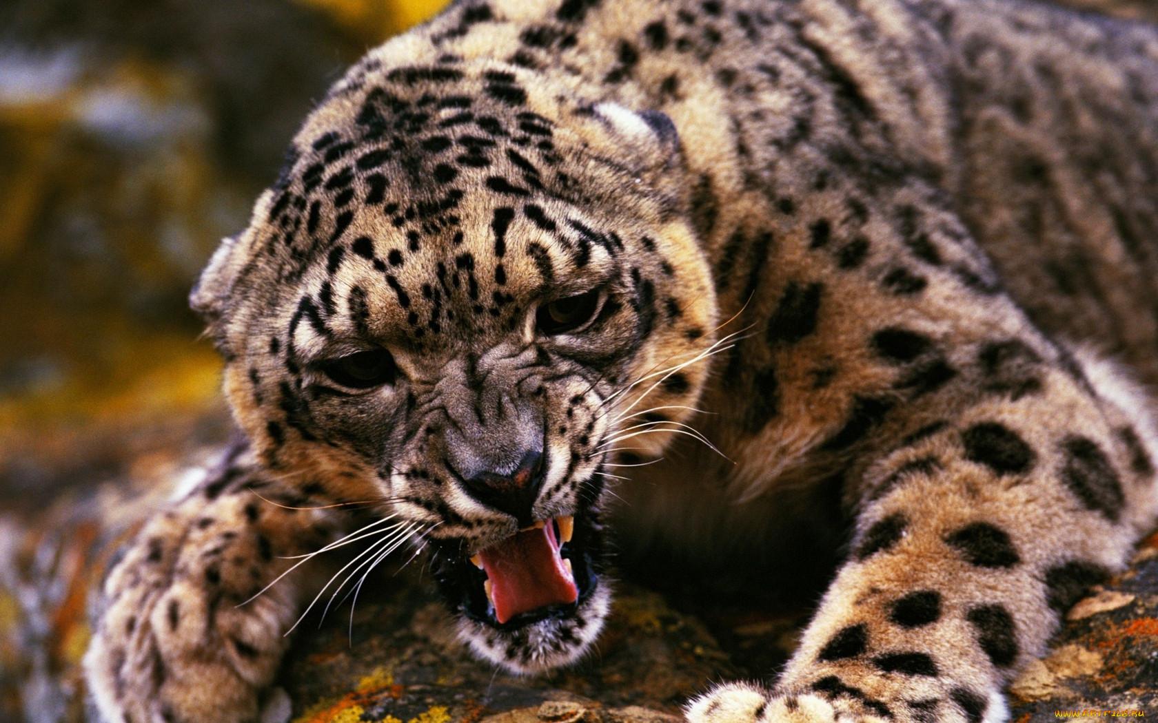 унесла самые красивые животные в мире картинки такой